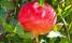 NDA declares popular herbal drug unsafe