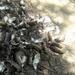 Thousands of rats descend on Myanmar villages