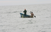 Fishing pressure risks erasing largest marine animals