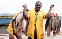 Fish exports hit sh540b