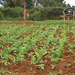 How we can empower subsistence farmers.