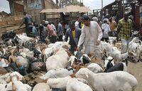 Animal prices hiked as Muslim mark Idd Adhuha
