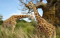 US trains Ugandans in combating wildlife trafficking
