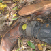 Dead body found in Mabira Forest