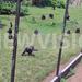 Holiday with Chimpanzees at Ngamba Island