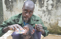Chimps to be celebrated