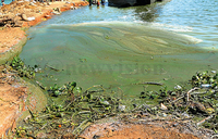 'Water pollution can reduce economic growth'