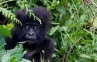 Hotspots, not trouble spots: Africa seeks tourism boom