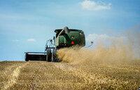 Drought, heat slash grain crops - study