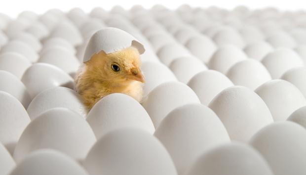 egg-incubation