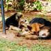 Rabies is Endemic in Arua district