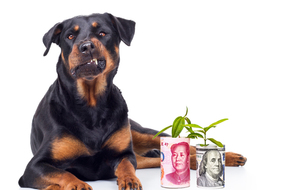 dobie-protecting-china-us-money