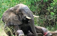 Uganda weighs in on global wildlife trade ban