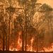 Key facts about Australia's catastrophic bushfires