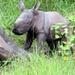 New rhino born at Ziwa Ranch