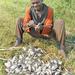 Tilapia on demand as prices shoot