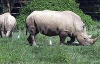 Five arrested over wildlife trophies