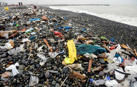 Plastics have entered human food chain, study shows