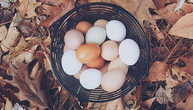 eggsbasket100672951orig