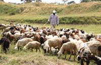 Pastor Kayanja spreads gospel of farming