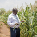 Farmers told to adopt drought-tolerant maize varieties