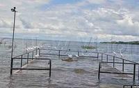 Ngamba Chimpanzee sanctuary drowning in Lake Victoria