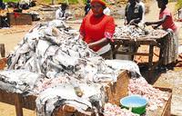 Uncontrolled  fish exports stealing Uganda's future