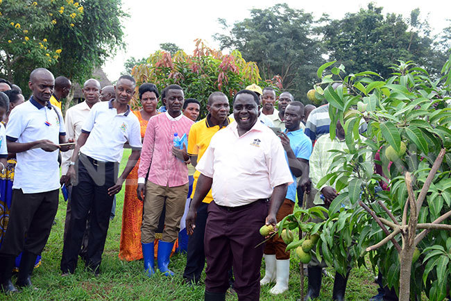 harles iwuuwa shows employees of tate ouse how the mangoes planted by resident oweri useveni at awumu residential emonstration arm have started bearing fruits