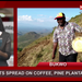 Locusts spread to Bukwo coffee, pine plantations