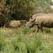 African tourism alarmed by rhino, elephant losses
