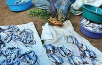 Fish potentially worth sh1.7m sold at sh1,000