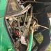 Kyankwanzi bus accident claims one