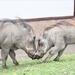 Friendly animals at Queen Elizabeth National Park