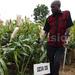 Sorghum growing improves farmers livelihood in Serere