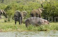 Fate of Africa's rhino, elephants to dominate wildlife meet