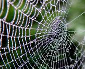 spiderwebwifiiotconnections100635877orig