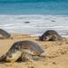 122 sea turtles found dead on Mexico beach