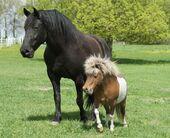 bighorseandlittlehorse100668142orig