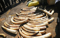 Suspected ivory smugglers deny case