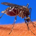 How malaria parasite beats top insecticides
