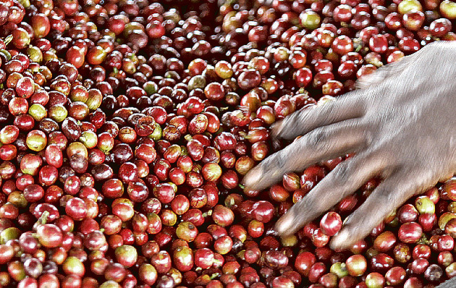 model to facilitate certification of coffeerelated business was also launched