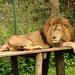 URA recovers lion skin, teeth, 20 buffalo horns