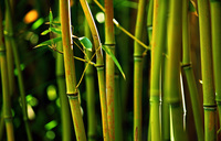 China-aided bamboo agri-business pays off
