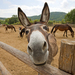 Donkey sales in South Africa banned over skin trade