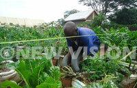 How to save money through urban farming