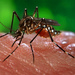 Global malaria battle stalls as financing gets tight