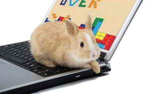 tetris-bunny
