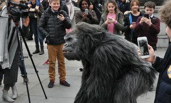 Gorilla 4 350x210