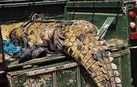10 people eaten by crocodiles in Mayuge - MP