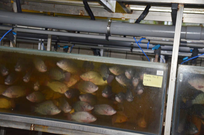 armers were amazed by this fish farm